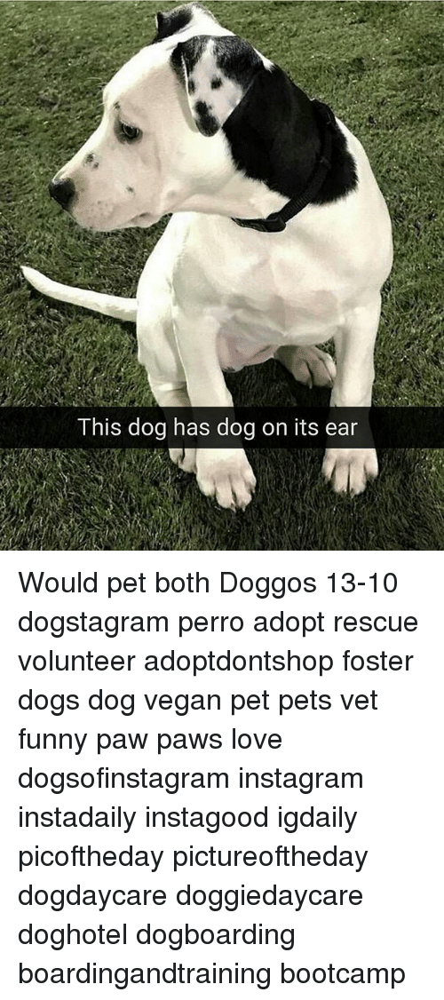 boths: This dog has dog on its ear Would pet both Doggos 13-10 dogstagram perro adopt rescue volunteer adoptdontshop foster dogs dog vegan pet pets vet funny paw paws love dogsofinstagram instagram instadaily instagood igdaily picoftheday pictureoftheday dogdaycare doggiedaycare doghotel dogboarding boardingandtraining bootcamp