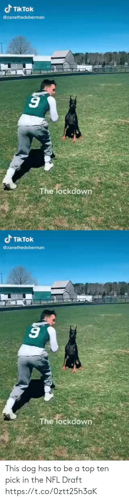 NFL draft: This dog has to be a top ten pick in the NFL Draft https://t.co/0ztt25h3aK