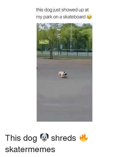 Skateboarding, Skate, and Dog: this dog just showed up at  my park on a skateboard This dog 🐶 shreds 🔥 skatermemes