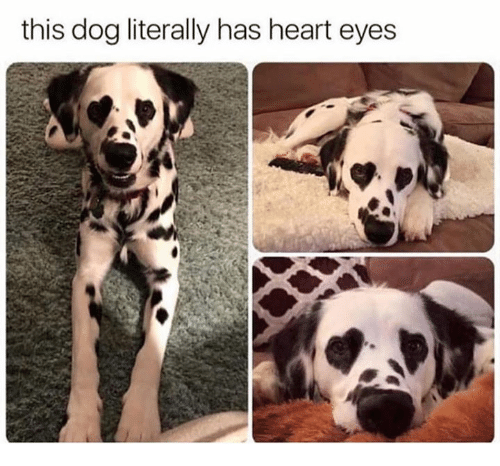 Memes, Heart, and 🤖: this dog literally has heart eyes