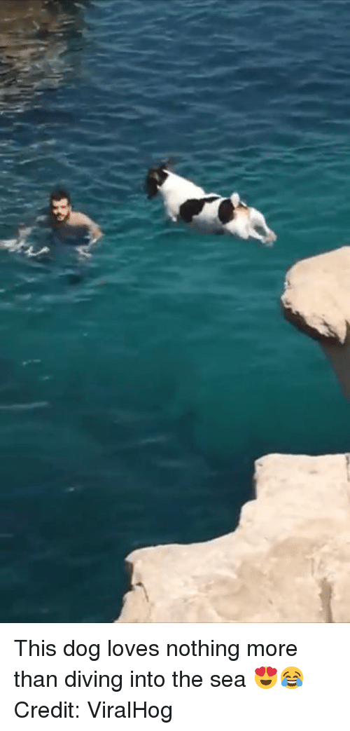 into-the-sea: This dog loves nothing more than diving into the sea 😍😂  Credit: ViralHog