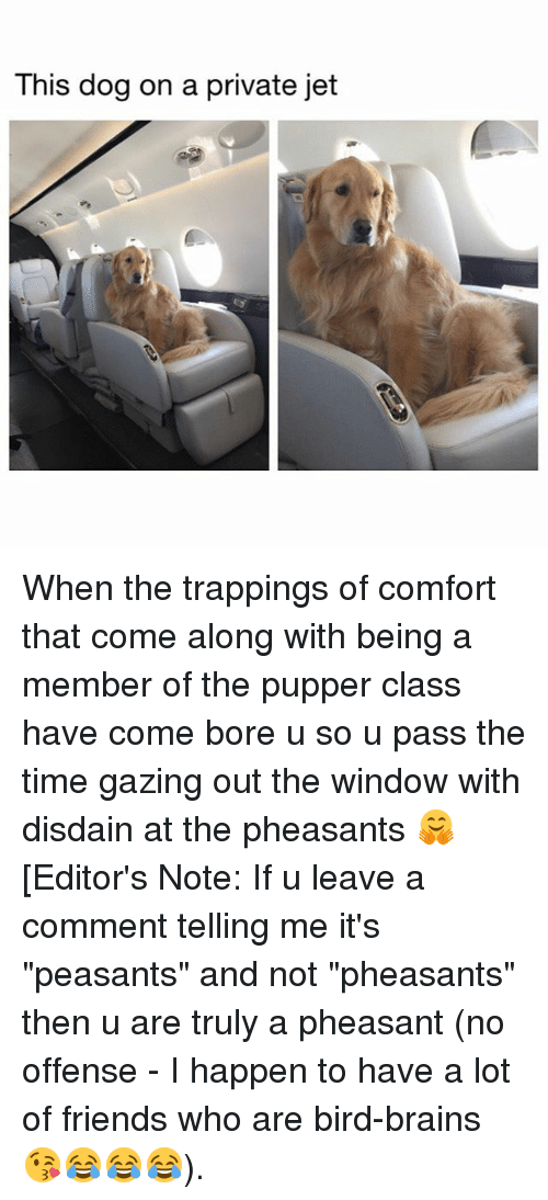 "Bored, Brains, and Friends: This dog on a private jet When the trappings of comfort that come along with being a member of the pupper class have come bore u so u pass the time gazing out the window with disdain at the pheasants 🤗 [Editor's Note: If u leave a comment telling me it's ""peasants"" and not ""pheasants"" then u are truly a pheasant (no offense - I happen to have a lot of friends who are bird-brains 😘😂😂😂)."