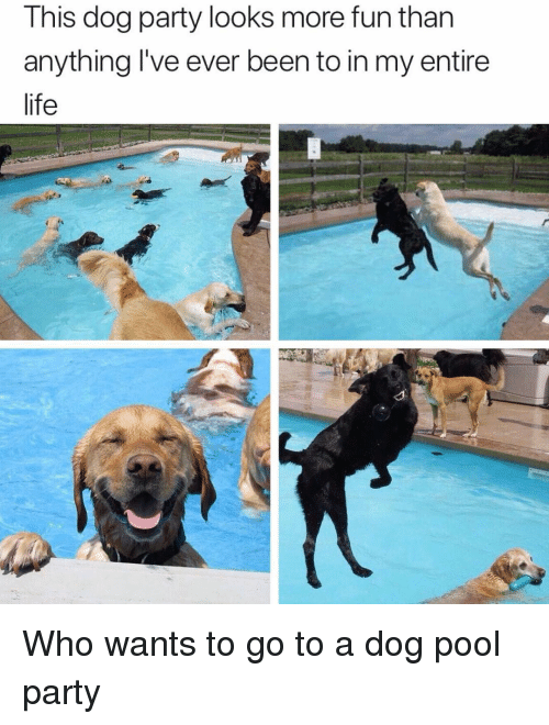 pool-party: This dog party looks more fun than  anything l've ever been to in my entire  life Who wants to go to a dog pool party