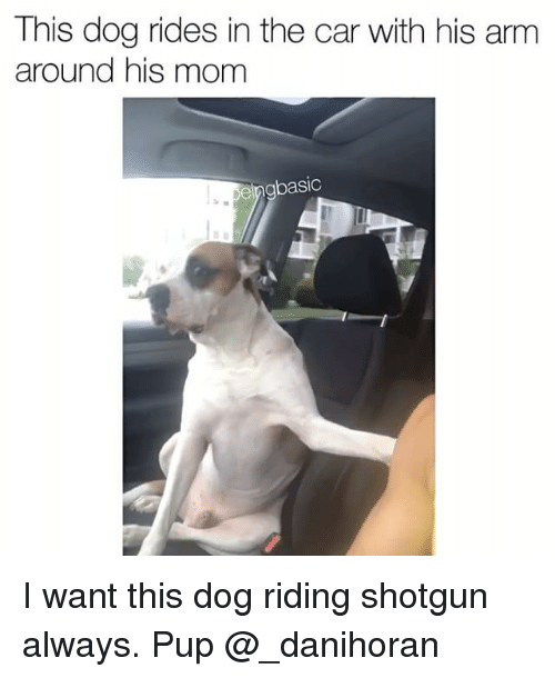 shotgunning: This dog rides in the car with his arm  around his mom  eingbasic I want this dog riding shotgun always. Pup @_danihoran