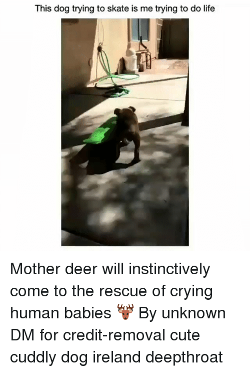 Crying, Cute, and Deer: This dog trying to skate is me trying to do life Mother deer will instinctively come to the rescue of crying human babies 🦌 By unknown DM for credit-removal cute cuddly dog ireland deepthroat