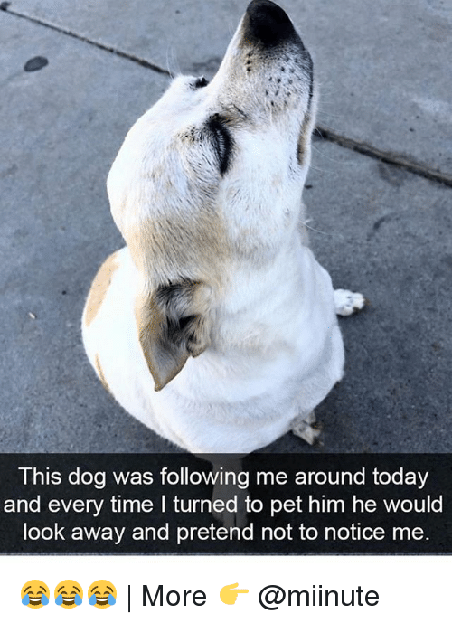 looking away: This dog was following me around today  and every time I turned to pet him he would  look away and pretend not to notice me. 😂😂😂 | More 👉 @miinute