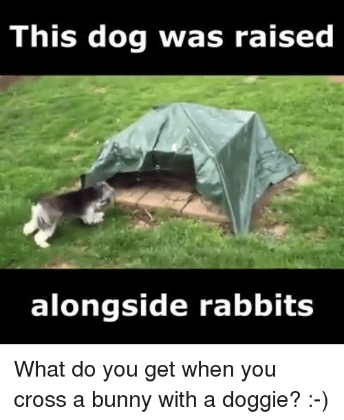 Bunni: This dog was raised  alongside rabbits What do you get when you cross a bunny with a doggie? :-)
