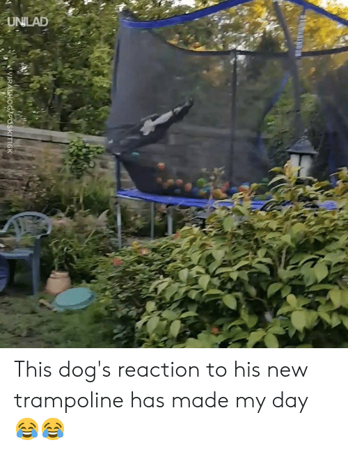 Trampoline: This dog's reaction to his new trampoline has made my day 😂😂