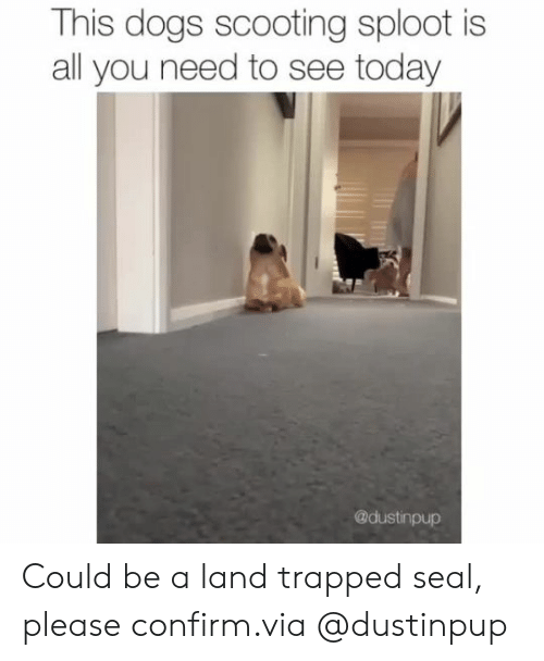 Dogs, Instagram, and Target: This dogs scooting sploot is  all you need to see today  @dustinpup Could be a land trapped seal, please confirm.via @dustinpup