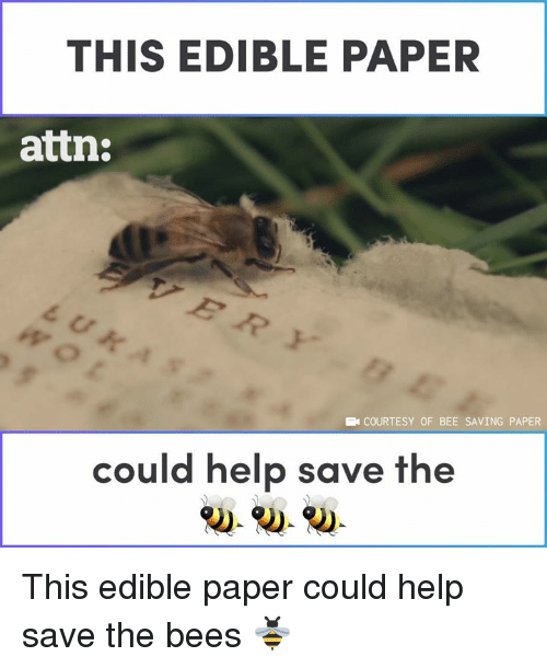 Memes, Help, and Bees: THIS EDIBLE PAPER  attn:  COURTESY OF BEE SAVING PAPER  could help save the This edible paper could help save the bees 🐝