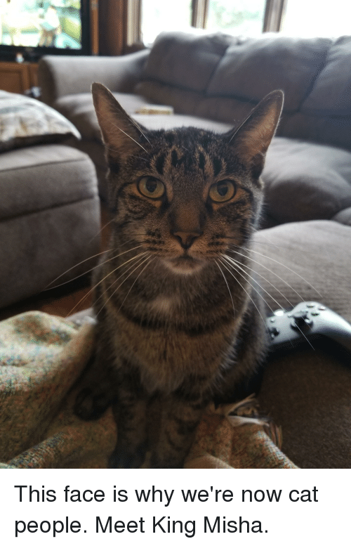 This Face: This face is why we're now cat people. Meet King Misha.