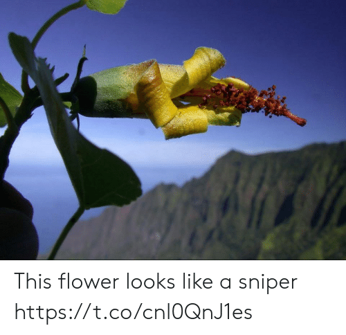 Flower, Faces-In-Things, and Sniper: This flower looks like a sniper https://t.co/cnl0QnJ1es