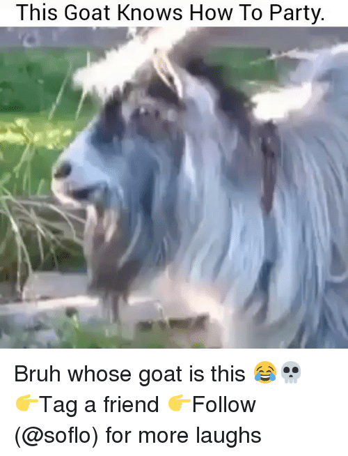 Bruh, Memes, and Party: This Goat Knows How To Party. Bruh whose goat is this 😂💀 👉Tag a friend 👉Follow (@soflo) for more laughs