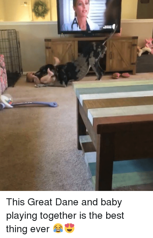 Best, Baby, and Great Dane: This Great Dane and baby playing together is the best thing ever 😂😍