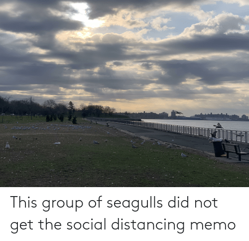 memo: This group of seagulls did not get the social distancing memo