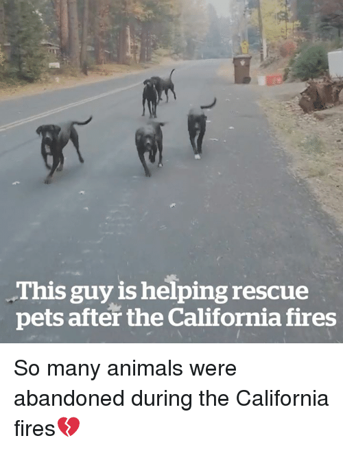Animals, California, and Pets: This guy is helping rescue  pets after the California fires So many animals were abandoned during the California fires💔