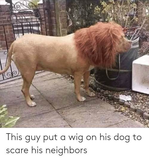 Scare, Neighbors, and Dog: This guy put a wig on his dog to scare his neighbors