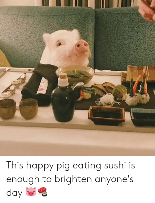 Happy, Sushi, and Pig: This happy pig eating sushi is enough to brighten anyone's day 🐷🍣