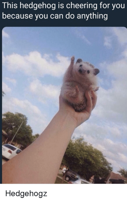 Hedgehog, Can, and You: This hedgehog is cheering for you  because you can do anything Hedgehogz