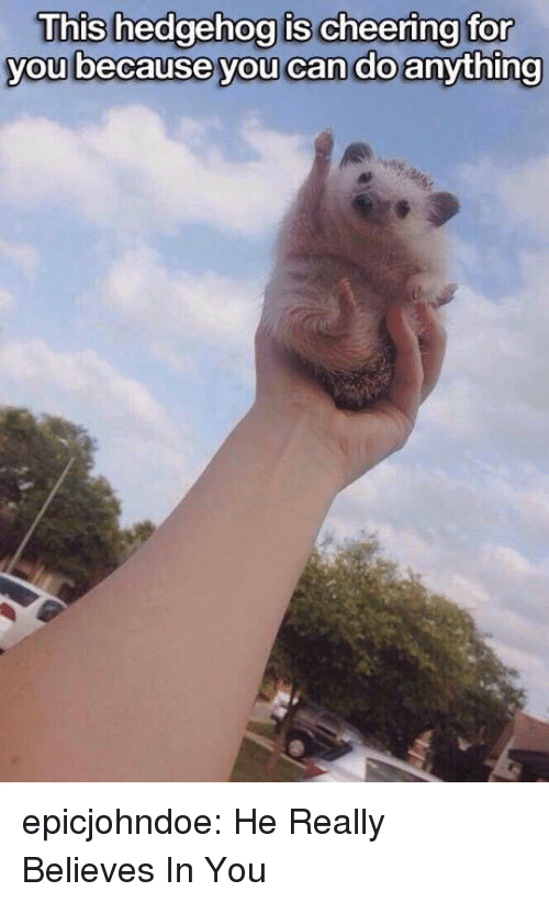 Tumblr, Blog, and Hedgehog: This hedgehog is cheering for  you because you can do anything epicjohndoe:  He Really Believes In You
