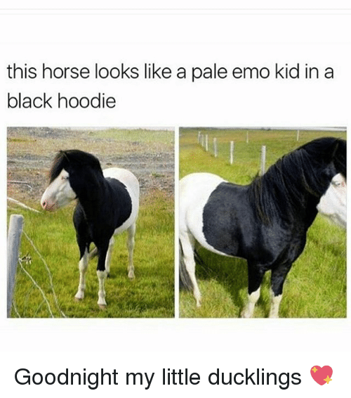 Memes, 🤖, and My Little: this horse looks like a pale emo kid in a  black hoodie Goodnight my little ducklings 💖