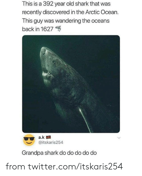 Dank, Twitter, and Shark: This is a 392 year old shark that was  recently discovered in the Arctic Ocean.  This guy was wandering the oceans  back in 1627  a.k  @itskaris254  Grandpa shark do do do do do from twitter.com/itskaris254