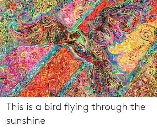 Flying Through: This is a bird flying through the sunshine