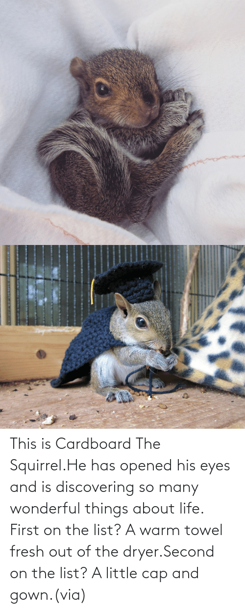 warm: This is Cardboard The Squirrel.He has opened his eyes and is discovering so many wonderful things about life. First on the list? A warm towel fresh out of the dryer.Second on the list? A little cap and gown.(via)