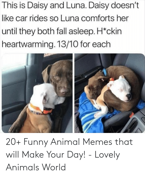 funny animal memes: This is Daisy and Luna. Daisy doesn't  like car rides so Luna comforts her  until they both fall asleep. H*ckin  heartwarming. 13/10 for each 20+ Funny Animal Memes that will Make Your Day! - Lovely Animals World