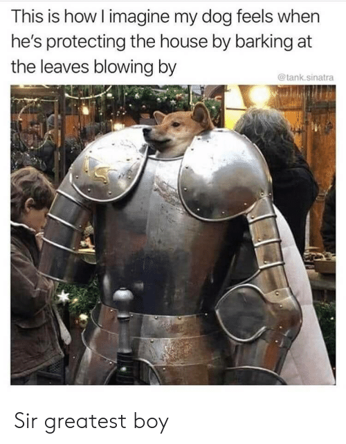 House, Boy, and How: This is how I imagine my dog feels when  he's protecting the house by barking at  the leaves blowing by  @tank.sinatra Sir greatest boy