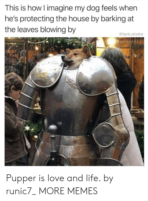pupper: This is how I imagine my dog feels when  he's protecting the house by barking at  the leaves blowing by  @tank.sinatra Pupper is love and life. by runic7_ MORE MEMES