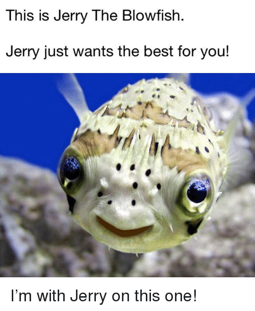 Best, One, and Blowfish: This is Jerry The Blowfish  Jerry just wants the best for you! <p>I'm with Jerry on this one!</p>