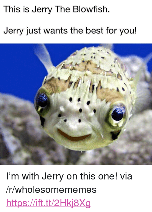 """Best, One, and Via: This is Jerry The Blowfish  Jerry just wants the best for you! <p>I'm with Jerry on this one! via /r/wholesomememes <a href=""""https://ift.tt/2Hkj8Xg"""">https://ift.tt/2Hkj8Xg</a></p>"""