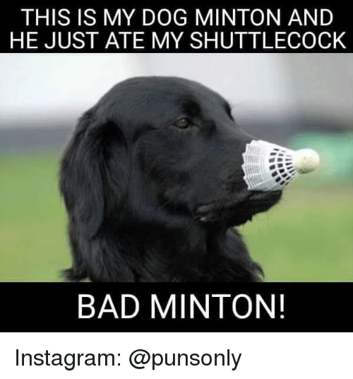 Bad, Instagram, and Dog: THIS IS MY DOG MINTON AND  HE JUST ATE MY SHUTTLECOCK  BAD MINTON! Instagram: @punsonly