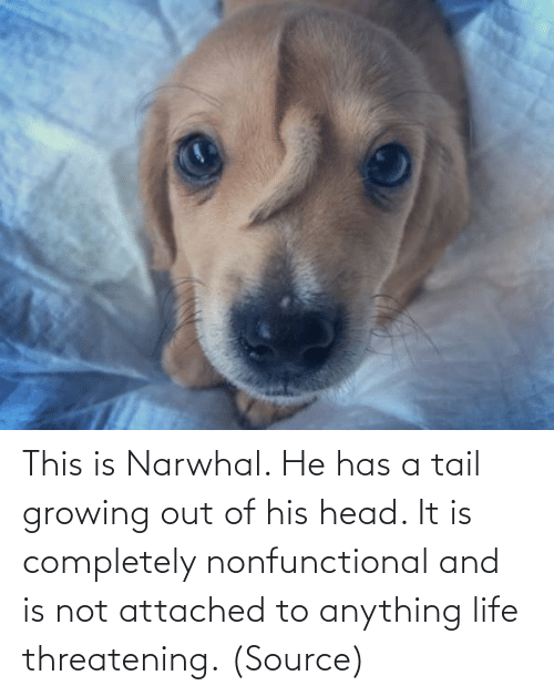 Out Of: This is Narwhal. He has a tail growing out of his head. It is completely nonfunctional and is not attached to anything life threatening. (Source)