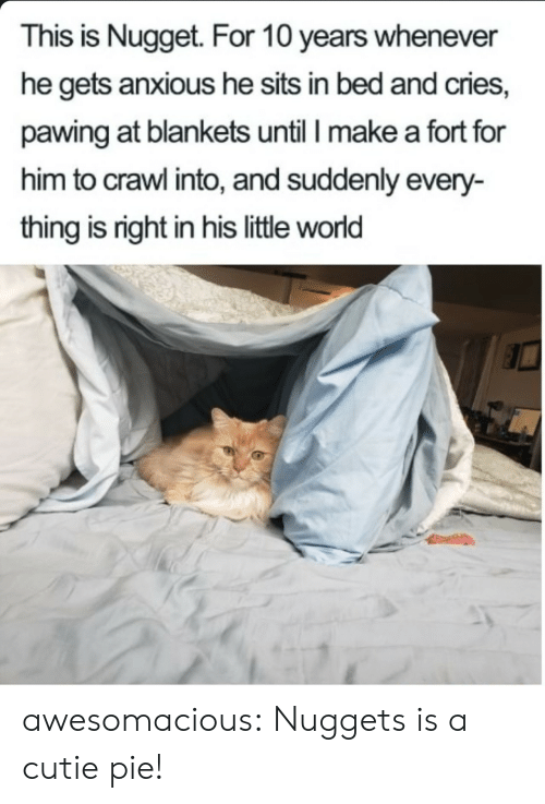 Tumblr, Blog, and World: This is Nugget. For 10 years whenever  he gets anxious he sits in bed and cries,  pawing at blankets until I make a fort for  him to crawl into, and suddenly every-  thing is right in his little world awesomacious:  Nuggets is a cutie pie!