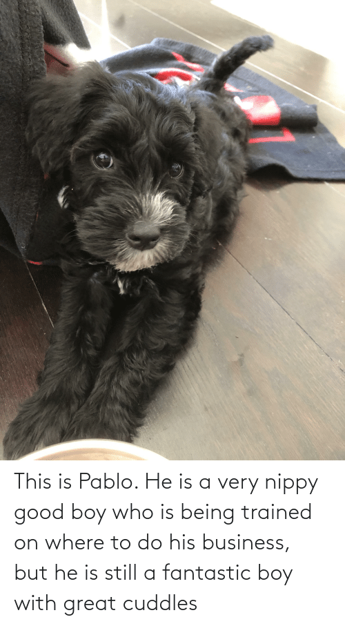 pablo: This is Pablo. He is a very nippy good boy who is being trained on where to do his business, but he is still a fantastic boy with great cuddles
