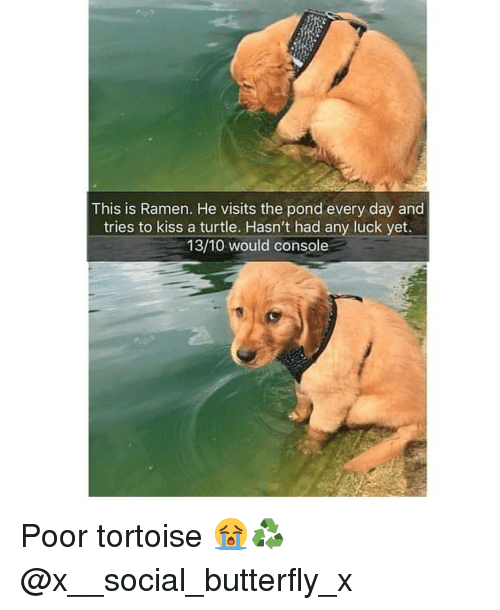 Pond: This is Ramen. He visits the pond every day and  tries to kiss a turtle. Hasn't had any luck yet  13/10 would console Poor tortoise 😭♻️ @x__social_butterfly_x