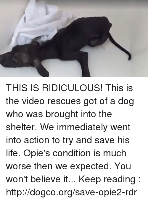 opi: THIS IS RIDICULOUS! This is the video rescues got of a dog who was brought into the shelter. We immediately went into action to try and save his life. Opie's condition is much worse then we expected. You won't believe it... Keep reading : http://dogco.org/save-opie2-rdr