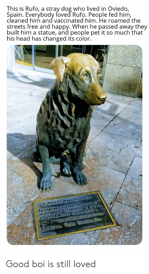 Head, Streets, and Free: This is Rufo, a stray dog who lived in Oviedo,  Spain. Everybody foved Rufo. People fed him,  cleaned him and vaccinated him. He roamed the  streets free and happy. When he passed away they  built him a statue, and people pet it so much that  his head has changed its color.  A RUFO, EL PERRO DE OVIEDO  EN HOMENAJE A TODOS AQUELLOS OUG  DEDICAN SUS ESFUERZOS AAYUDA  A LOS ANIMALES ABANDONAPOS  ESCULTORA SARA IGLESIAS POL  SEPTEDBREV01  OBRA K KIZDAPOR INIEATVA POPULAR Good boi is still loved