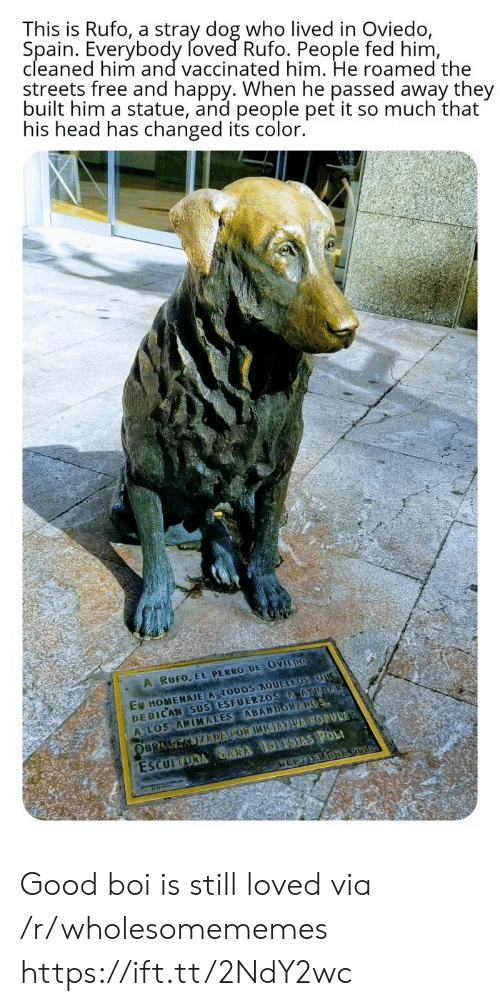Head, Streets, and Free: This is Rufo, a stray dog who lived in Oviedo,  Spain. Everybody foved Rufo. People fed him,  cleaned him and vaccinated him. He roamed the  streets free and happy. When he passed away they  built him a statue, and people pet it so much that  his head has changed its color.  A RUFO, EL PERRO DE OVIEDO  EN HOMENAJE A TODOS AQUELLOS OUG  DEDICAN SUS ESFUERZOS AAYUDA  A LOS ANIMALES ABANDONAPOS  ESCULTORA SARA IGLESIAS POL  SEPTEDBREV01  OBRA K KIZDAPOR INIEATVA POPULAR Good boi is still loved via /r/wholesomememes https://ift.tt/2NdY2wc