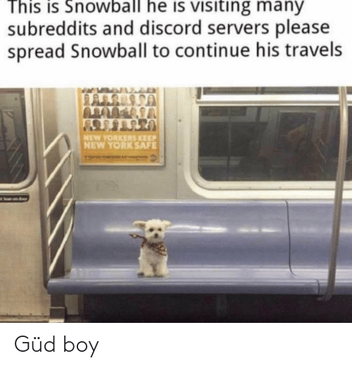 Funny, New York, and Boy: This is Snowball he is visiting many  subreddits and discord servers please  spread Snowball to continue his travels  LALS SSA  MEW YORKERS KEEP  NEW YORK SAFE  on dor Güd boy