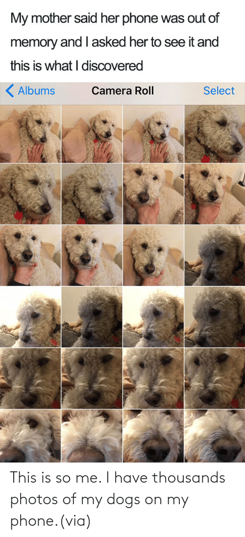 Status: This is so me. I have thousands photos of my dogs on my phone.(via)