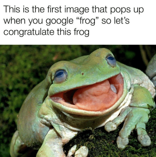 """congratulate: This is the first image that pops up  when you google """"frog"""" so let's  congratulate this frog"""
