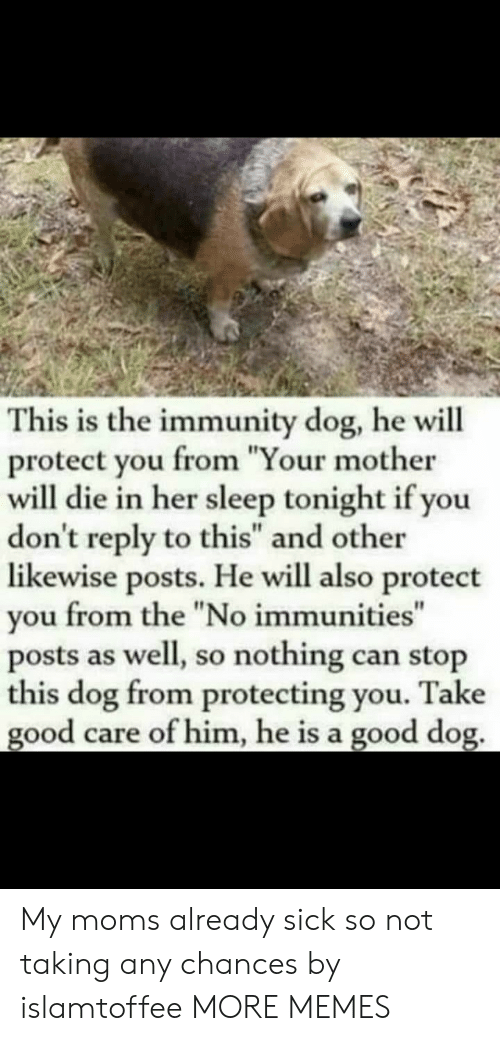 "Your Mother: This is the immunity dog, he will  protect you from ""Your mother  will die in her sleep tonight if you  don't reply to this"" and other  likewise posts. He will also protect  you from the ""No immunities""  posts as well, so nothing can stop  this dog from protecting you. Take  good care of him, he is a good dog. My moms already sick so not taking any chances by islamtoffee MORE MEMES"