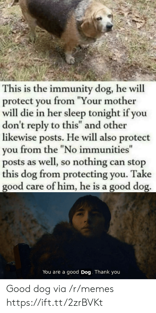 "Your Mother: This is the immunity dog, he will  protect you from ""Your mother  will die in her sleep tonight if you  don't reply to this"" and other  likewise posts. He will also protect  from the ""No immunities""  you  posts as well, so nothing can stop  this dog from protecting you.  good care of him, he is a good dog.  Take  You are a good Dog. Thank you Good dog via /r/memes https://ift.tt/2zrBVKt"