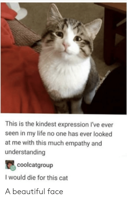 Life No: This is the kindest expression I've ever  seen in my life no one has ever looked  at me with this much empathy and  understanding  coolcatgroup  I would die for this cat A beautiful face