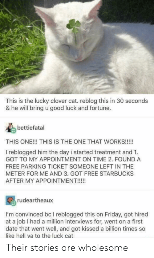 Interviews: This is the lucky clover cat. reblog this in 30 seconds  & he will bring u good luck and fortune  bettiefatal  THIS ONE!!! THIS IS THE ONE THAT WORKS!!!!  I reblogged him the day i started treatment and 1  GOT TO MY APPOINTMENT ON TIME 2. FOUND A  FREE PARKING TICKET SOMEONE LEFT IN THE  METER FOR ME AND 3. GOT FREE STARBUCKS  AFTER MY APPOINTMENT!!!!!  rudeartheaux  I'm convinced bc I reblogged this on Friday, got hired  at a job I had a million interviews for, went on a first  date that went well, and got kissed a billion times so  like hell ya to the luck cat Their stories are wholesome
