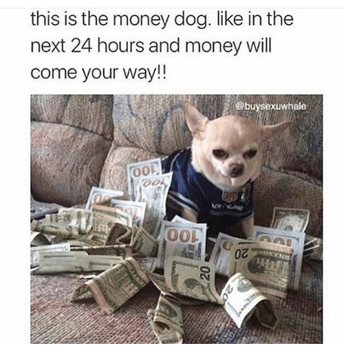 Money Dog: this is the money dog. like in the  next 24 hours and money will  come your way!!  xuwhale  0o  OOL  0Z