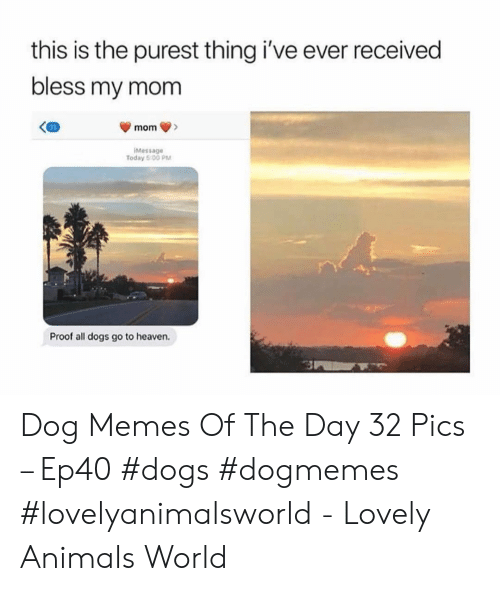 Animals, Dogs, and Heaven: this is the purest thing i've ever received  bless my mom  mom  iMessage  Today 5:0O PM  Proof all dogs go to heaven. Dog Memes Of The Day 32 Pics – Ep40 #dogs #dogmemes #lovelyanimalsworld - Lovely Animals World